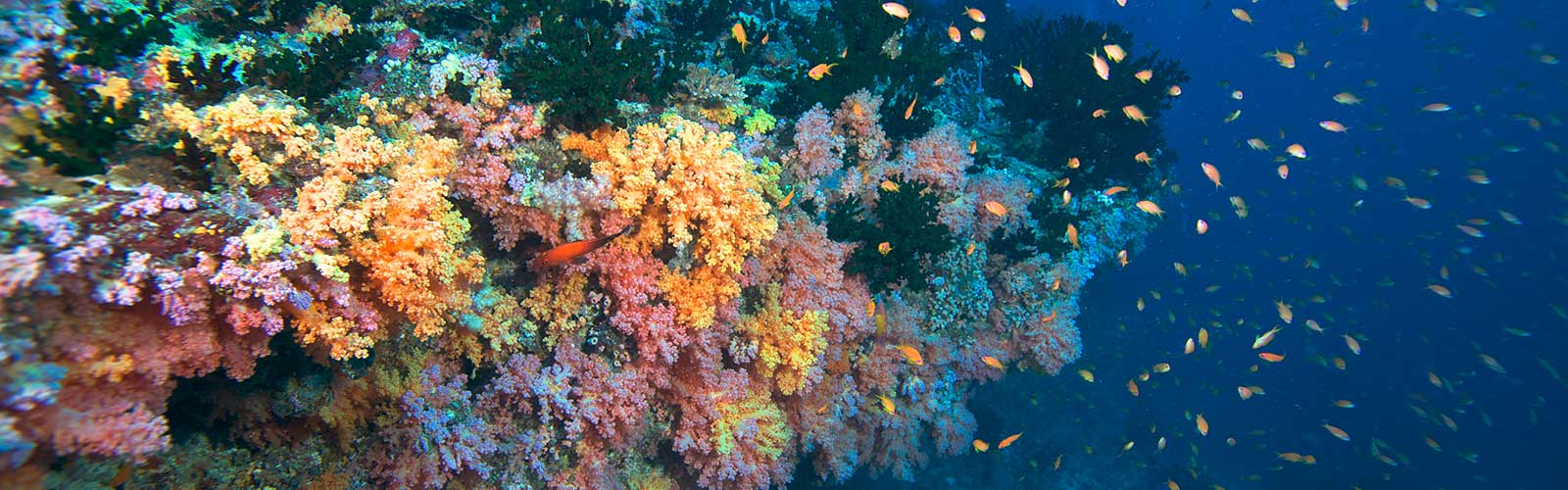 soft_coral_1600_500